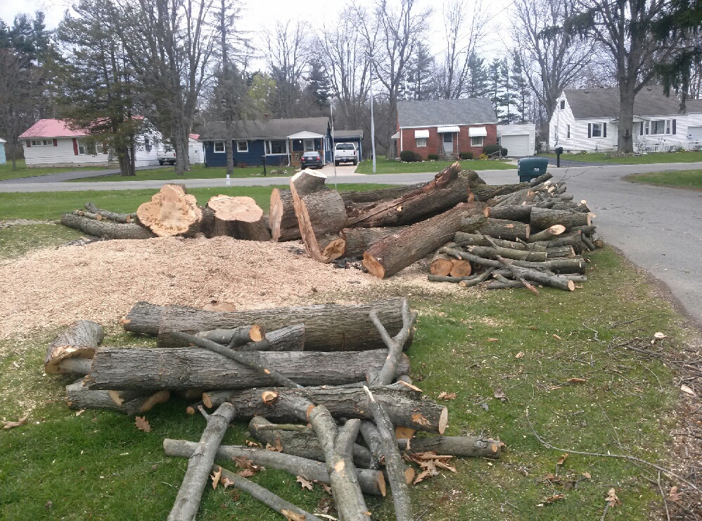 tree removal in bellville oh