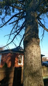 Emergency Tree Removal in Mansfield