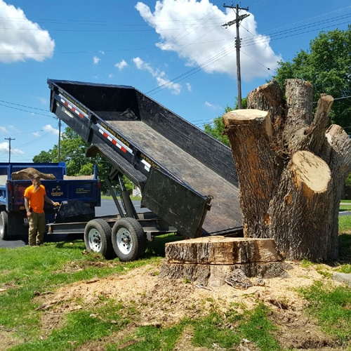 Tree Removal Service in Mansfield OH