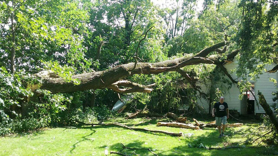 Tree Damage in Mansfield OH