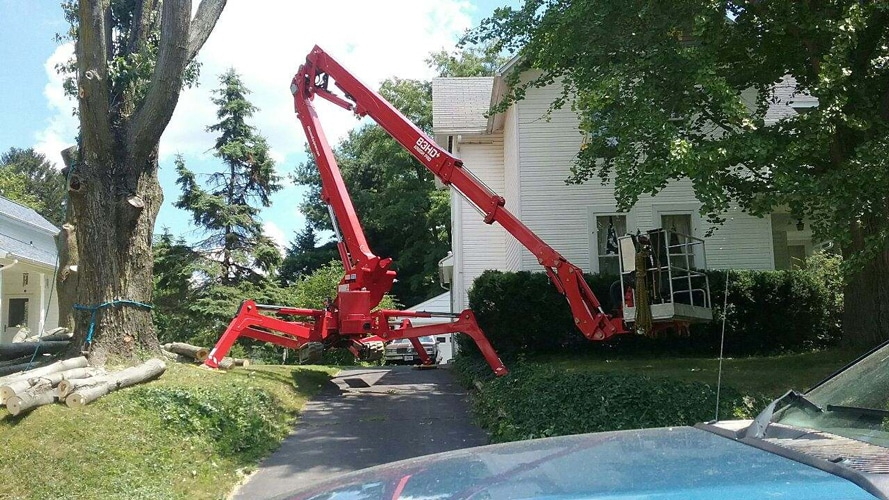 Tree Removal in Mansfield OH