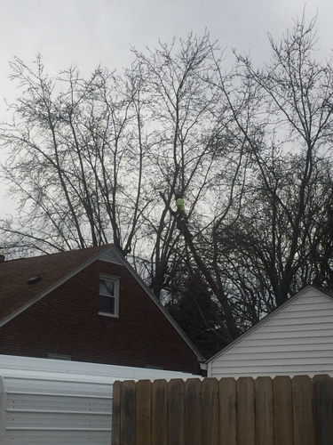 Tree Take Down in Mansfield OH