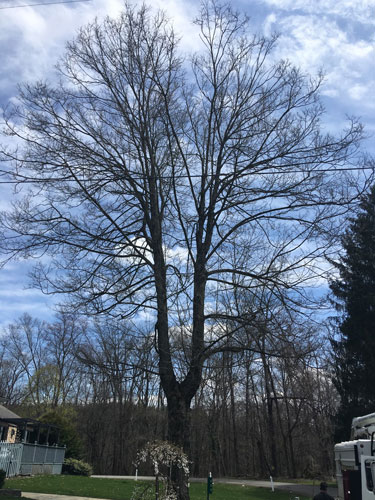Tree Trimming in Mansfield OH