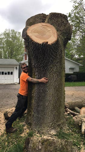 Chompers Tree Service Tree Removal in Mansfield